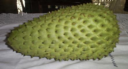 Para que sirve las hojas de guanabana como planta medicinal